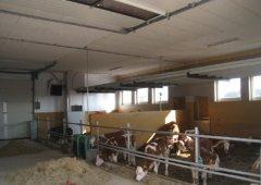 Calve stable Peuerbach (Austria)